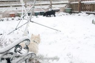 Snow in spring-5